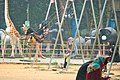 Girls swing in a rocking cradle at Pourashava park, Dharmasagar, Comilla 2018-01-13.jpg