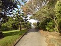 Going Up The Hill On Northwestern Cycleway.jpg