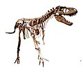 Gorgosaurus white background.jpg