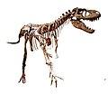 Gorgosaurus white background.jpg