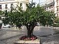 Granada - Granatapfelbaum - panoramio.jpg