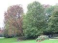 Grands arbres du jardin de l'Élysée.jpg