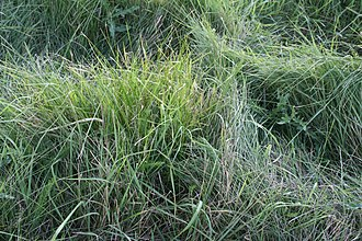 Texture (visual arts) - Image: Grass texture