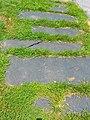 Grassy Slate sidewalk Delta PA.JPG