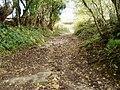 Green Knap Lane - geograph.org.uk - 1774529.jpg
