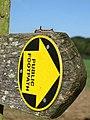 Grey Dagger Caterpillar (Acronicta psi) - geograph.org.uk - 1508910.jpg