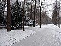 Großer Garten, Dresden in winter (1099).jpg