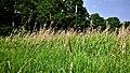 Hässeler Weiher von Neuenhaßlau - Stroh auf der Wiese.jpg