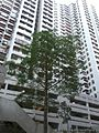 HK 天后 Tin Hau 金龍台 6 Dragon Terrace 金龍大廈 Dragon Court Block facade tree May-2014.jpg