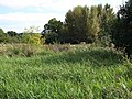 Hackney Marshes - geograph.org.uk - 942415.jpg