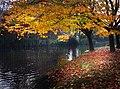 Hagley Park Christchurch New Zealand. (9568578994).jpg