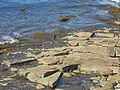 Halibut Point shoreline from overlook.JPG