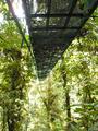 Hanging bridges, Costa Rica.png