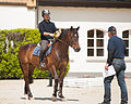 Haras national Avenches - 5.jpg