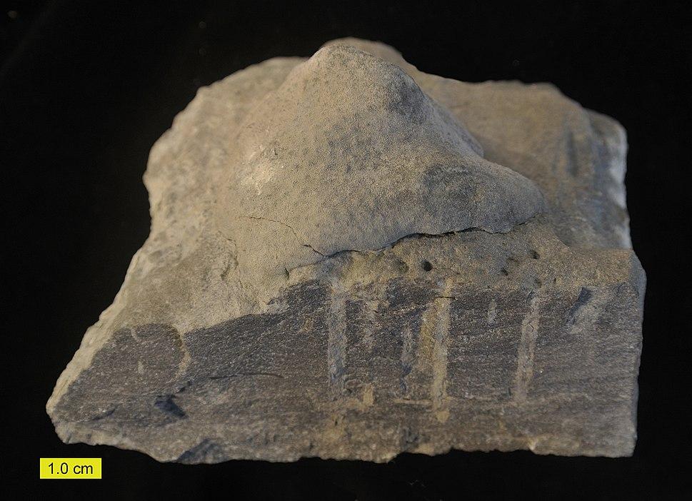 Hardground oblique Ordovician 071514c