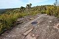 Hike near Woy Woy - panoramio (1).jpg