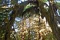 Hoh moss arch sunlight cbubar (16680290604).jpg
