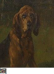Hond van de heilige Hubertus