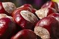 Horse-chestnut conkers (37572638741).jpg