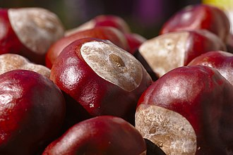 "Maroon - The word ""maroon"" derives from the French marron, meaning chestnut."