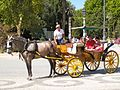 Horse and Carriage Ride.jpg