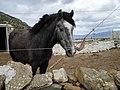 Horse in apano meria.jpg