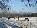 Horses in the Snow at Cottingley(1) - geograph.org.uk - 1636142.jpg