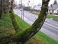 Hospital Road, Omagh - geograph.org.uk - 1048916.jpg