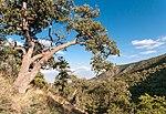 Hunter Canyon.jpg