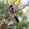 Huntington Gardens 34 - bird.jpg