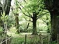 Hyden Wood, near East Meon - geograph.org.uk - 168331.jpg