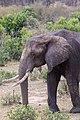 Impressions of Serengeti (139).jpg