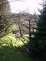In Gisburn Forest - geograph.org.uk - 163922.jpg