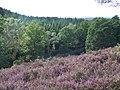 In der Heide - panoramio - enrico19 (1).jpg