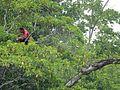In the Corner of a Tree (31263782402).jpg