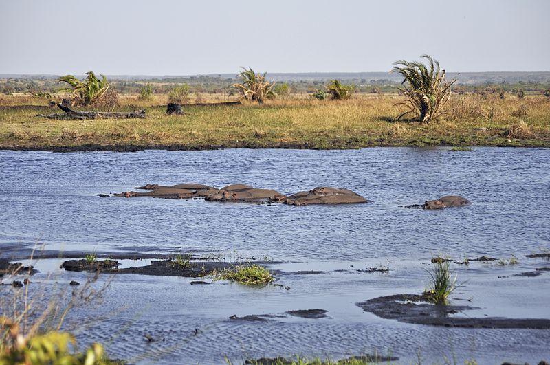 800px-isimangaliso_wetland_park_281494104885929