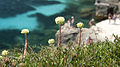Isole egadi sicily boboviel favignana marettimo levanzo (8).jpg