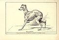 Italian Greyhound BDL.jpg