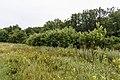 Izvoare – Risipeni, monument al naturii img 043.jpg