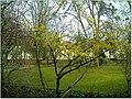 January Frost Botanic Garden Freiburg blühende China Zaubernuß - Master Botany Photography 2014 - panoramio.jpg