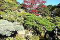 Japanese Tea Garden (San Francisco) - DSC00184.JPG