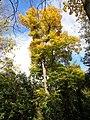 Jardín del Príncipe - panoramio (7).jpg