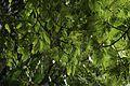 Jardim Botânico do Rio de Janeiro - 130716-7236-jikatu (9333128457).jpg