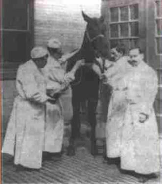 Jim (horse) - Jim