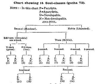 Jiva - Classification of Jivas