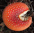 Jyväskylä - mushroom 24.jpg