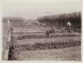 KITLV - 30203 - Kurkdjian, N.V. Photografisch Atelier - Soerabaja - Sugar plantation in East Java - 1921.tif
