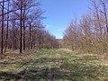 Kab-hegy felé - panoramio (1).jpg