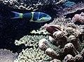Kagoshima Aquarium (4509031600).jpg