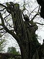 Kew Gardens 0478.JPG